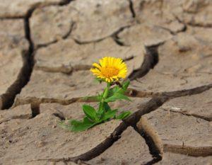 Fleur, La Vie, Crack, Désert, La Sécheresse, Survie
